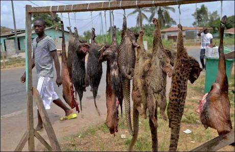 "Bushmeat Demand Overwhelming ""Supply"" of 301 Mammal Species"