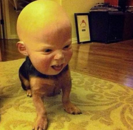 Top 10 Scariest Halloween Costumes for Dogs You Will Ever See ...