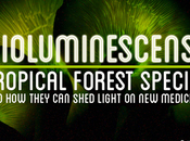 Bioluminescence: Tropical Forest Species They Shed Light Medicines