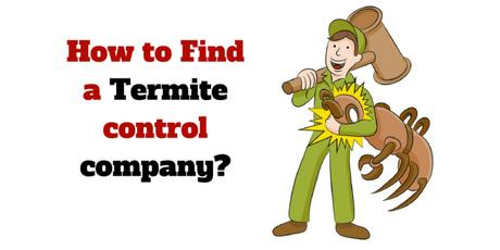 how-to-find-a-termitecontrol-company
