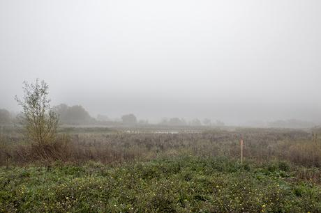 Floodplain Forest Nature Reserve Shrouded in Mist