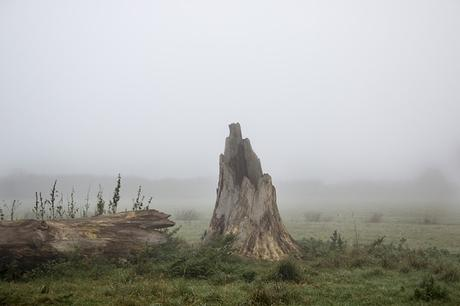Stump in the Mist