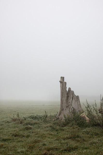 Stump in the Mist 2