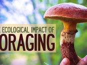 Ecological Impact Foraging