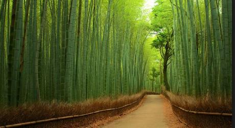Bamboo Forest An