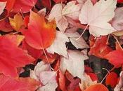 Lately: Autumn 2016