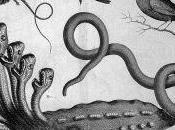 Battling Seven-headed Hydra: Crassula Control Europe