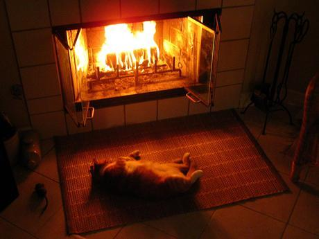 fat cat in front of a fire