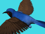 Birds Bikaner, Rajasthan