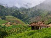Hill Tribes Mountain Mists (Chiang Mai)