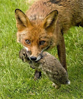 The Fox and the Rabbit: What Does Fibromyalgia Feel Like?