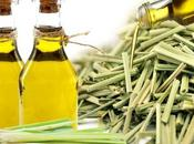 Health Medicinal Benefits Lemongrass Essential