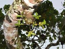 Ants Behave Mini Farmers Fiji