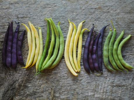 Legumes Healthy Diet - Black, Green , Yellow beans