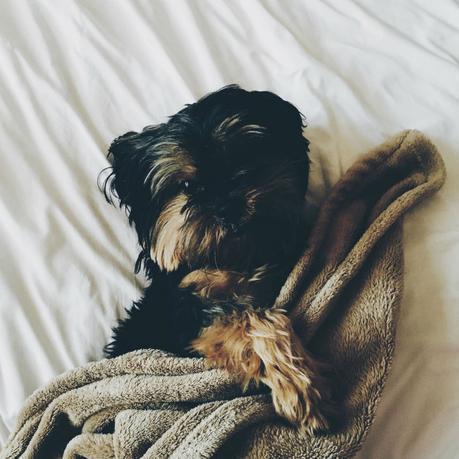 right mattress comfy dog