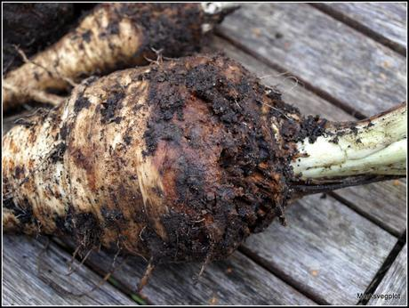Parsnips - some very mixed results