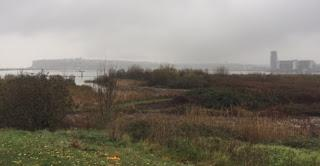 The Cardiff wetlands