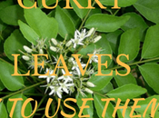 Best Curry Leaves Your Cooking?