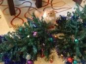 Grinch Loving Cats That Destroyed Christmas
