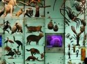 Mainstreaming Biodiversity: Real Solution Devastation Nature?