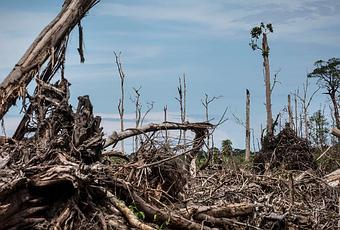 Short article on dangers of deforestation