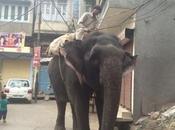DAILY PHOTO: City Elephant