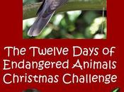 Twelve Days Endangered Animals Christmas Challenge