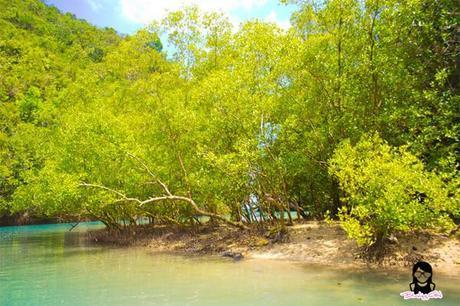 Mangroves at the Bojo River in Aloguinsan Cebu | Blushing Geek