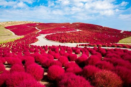 The Most Amazing Places in the World for Flowers