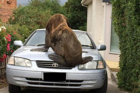 car damaged by seal ~ is the damage payable by Insurer ?