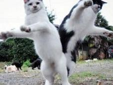 Cats Dancing Years Party