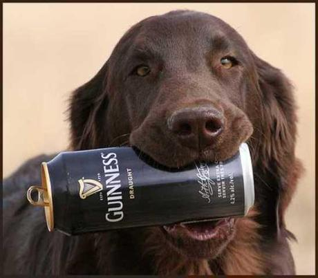 Funny or Foul? 10 Drunk Dogs Inspire the St. Patrick's Day Spirit