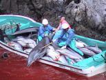 Dolphins Got A Ticket To Ride (To Fly), But At What Cost?