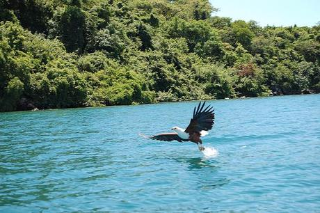 National Park Profile (Evolution Special): Lake Malawi National Park