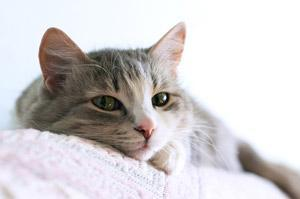 Cats can live longer with early diagnosis: image via howtodothings.com