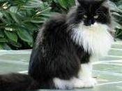 Featured Animal: Norwegian Forest