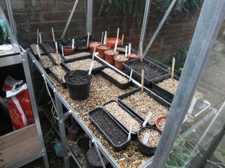 The Greenhouse Year – March 2012
