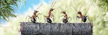Amazing Ant Photography