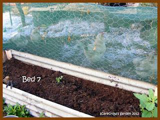 Bed 7: Peas and Greens
