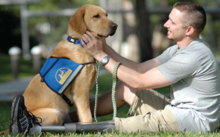 Jeffrey Adams, first OEF/OIF vet to get a CCI service dog, with Sharif, his CCI dog: image via allbrittain.com