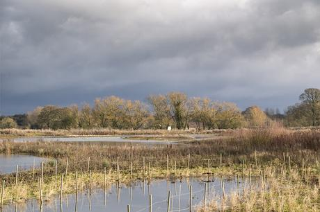 Floodplain Forest Nature Reserve