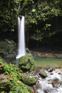 emerald-pool-dominica-1