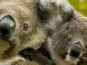 Threat Species from Climate Change Should Provoke Shame Hearts