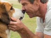 Dog's Safety Films