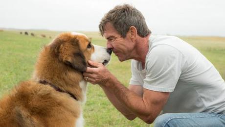 Dog's Safety in Films