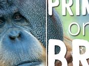 Primates Brink