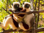 MADAGASCAR: Leaping Lemurs, Guest Post Owen Floody, Part
