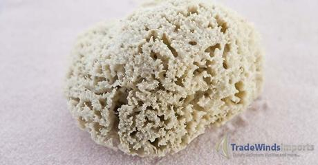 close up of a sponge