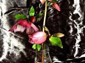 Vase Monday Indecision