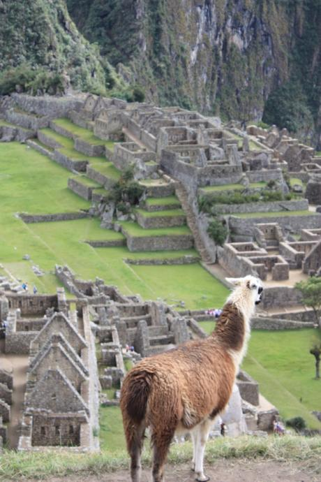 DAILY PHOTO: Machu Picchu Green